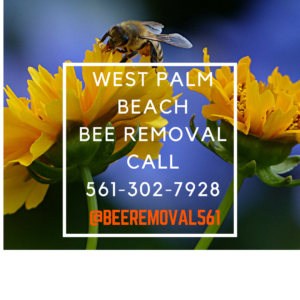 West Palm Beach Bee Removal Call 561 302 7928